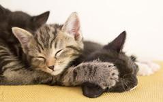20121028_0437c (Fantasyfan.) Tags: kittens sleeping fantasyfanin