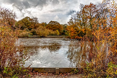 Autumn colours (PhredKH) Tags: 2470mm canoneos5dmkiii canonphotography connaughtwater ef2470mmf4lisusm eppingforest essex forest fredkh photosbyphredkh phredkh splendid trees autumn clouds lake nature outdoorphotography outdoors scencwater sky water tree grass wood