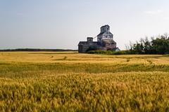 Dunleath Federal (TigerPal) Tags: sask saskatchewan prairie plains parkland rural abandoned forgotten backroads exploration dunleath elevator ruin grain agriculture
