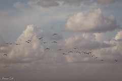 Clouds are the carpe diem of nature (Irina1010) Tags: sky clouds birds flying blue soft light sunset goldenhour beautiful nature canon outstandingromanianphotographers coth ngc coth5