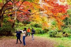 At Todoroki Valley Park of autumn leaves, Setagaya, Tokyo : 等々力渓谷公園 (Dakiny) Tags: 2018 winter december japan tokyo setagaya todoroki nature landscape park valleytodorokivalleypark street plant tree maple people autumnleaves nikon d750