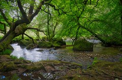 Mysterious River (C.G.Photos) Tags: river golitha falls cornwall england vacations landscapes woodland