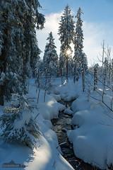 Happy New Year! (Foto-Wandern.com) Tags: deutschland schnee jahreszeiten oberharz natur winter harz sonne germany lowersaxonia niedersachsen tourismus upperharz nature snow sun sunrays tourism neujahr happynewyear