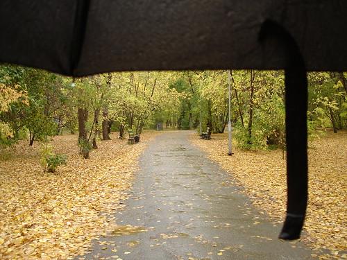 Под дождём в Зелёной роще ©  ayampolsky