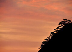 Beautiful sunrise sky of Huangshan and Yellow Mountain silhouettes in  China (Germán Vogel) Tags: unescoworldheritagesite slope hill mountainside peaceful serene pinetrees huangshanpines trees silhouette asia eastasia china travel traveldestinations tourism touristattractions landmark holidaydestination famousplace chineseculture huangshan yellowmountain mountain nature beautyinnature anhuiprovince naturalpark naturallandscape sunset sunrise morning sky clouds huangshanmountain