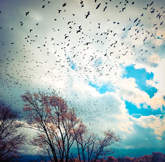 Migration (Melnee Benfield) Tags: birds coulds sky trees canon lightroom