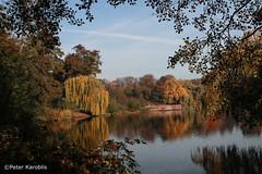 IndianSummer in the Hamburg Stadtpark (peterkaroblis) Tags: bäume trees herbst autumn indiansummer laub leaves farbe colour hamburg stadtpark