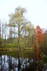DSC02027 (farmspeedracer) Tags: tree lake 2017 november red sky cold park forest