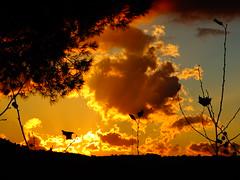 Λιμνη Μαραθωνα DSC07530 (omirou56) Tags: 43ratio sonydschx60v λιμνημαραθωνα αττικη συννεφα ηλιοβασιλεμα σιλουετεσ ουρανοσ sunset clouds silhouette sky