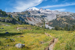 Decisions (writing with light 2422 (Not Pro)) Tags: mountrainiernationalpark mountrainier mountain volcano stratovolcano rock meadow indianbar washingtonstate landscape scree richborder sonya7 variotessartfe42470 pacificnorthwest cowlitzdivide