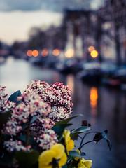 A0153112 (rpajrpaj) Tags: amsterdam city netherlands nederland nederlandvandaag bluehour thebluehour cityscape citylights