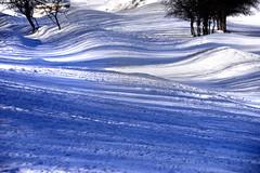 Tree waves (MelindaChan ^..^) Tags: innermongolia china 内蒙古 snow white 雪 tree plant nature chanmelmel mel melinda melindachan 冰 bashang 壩上