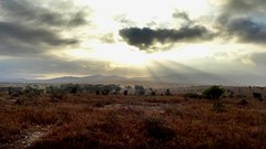 Souvenir du Kenya (batistine.cousin) Tags: sun taitahills afrique africa sunny morning matin aube kenya safari