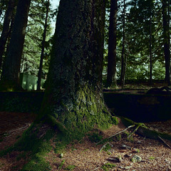 And the light came through (lebre.jaime) Tags: portugal beira covilhã forest park tree light beam lightbeam moth hasselblad 500cm distagon c3560 film film120 120 analogic 6x6 kodak portra400 portra iso400 epson v600 affinity affinityphoto