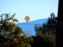 Hot Air Balloon Descending - Rincon Mountains (Chic Bee) Tags: orangetree hotairballoon descending descent wires bluesky morning tucson arizona usa rinconmountains odc ourdailychallenge abalancingact dof depthoffieldeffect powershotsx70hs canon bridgecamera