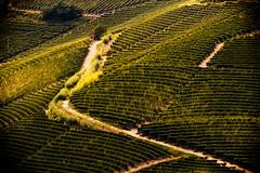 Sulla Strada Per Barolo (MilleLuci) Tags: verde barolo vigneto vigna vino wine winery landscape paesaggio campagna italy piemonte piedmont