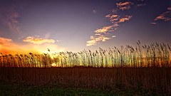 He Brings Down The Fire From The Sky (Alfred Grupstra) Tags: nature sunset agriculture ruralscene sky sunlight field sun summer sunrisedawn yellow plant outdoors farm dusk landscape meadow season growth winter