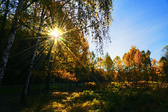 Autumn day (prokhorov.victor) Tags: осень природа пейзаж солнце деревья лес