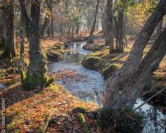 New Forest - Bratley Water-2 re-edit.jpg (Robert M Sadler) Tags: 24105lf4 trees landscape newcamera canon newforest buildingslandscape m5 autumn dorset eosm5 photoshopped eos 24105f4l