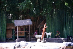 Livestock is then introduced to put further strain on resources (shankar s.) Tags: seasia indonesia java bali islandparadise baliisland touristdestination balisafari balisafariandmarinepark entranceplaza tamansafariiii zoo openzoo fauna wildlife ticketingcounter reception elephantride tourists riders pachyderm elephant herbivore animal borneopygmyelephant asianelephant elephasmaximusborneensis elephantshow performingelephants play drama humanelephantconflict sombre zoovolunteer docent