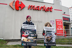 Carrefour Kraków1.d (Otwarte Klatki) Tags: aktywizm karpie streetwork