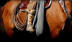 Pilchas (Eduardo Amorim) Tags: gaucho gauchos gaúcho gaúchos botadepotro botadegarrãodepotro estribo estrivo stirrup étrier staffa steigbügel estribera recado recao loro loros caballo horse cheval cavallo pferde pferd cavalo 馬 حصان 马 лошадь ঘোড়া 말 סוס ม้า häst hest hevonen άλογο ayacucho provinciadebuenosaires buenosairesprovince argentina argentine pilchas pilchasgauchas pampa pampaargentino pampaargentina sudamérica südamerika suramérica américadosul southamerica amériquedusud americameridionale américadelsur americadelsud crioulo criollo crioulos criollos cavalocrioulo cavaloscrioulos caballocriollo caballoscriollos eduardoamorim