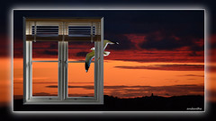 The window and the gull (andantheandanthe) Tags: creativity close up macro trix photoshop adobe sky sunset clouds window sea gull blinds