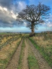 Another Lone Tree (Mr_Pudd) Tags: drystonewall wall huddersfield birdsedge sky clouds grass track tree