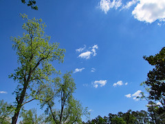 Northeast Park In Springtime. (dccradio) Tags: lumberton nc northcarolina robesoncounty outdoor outside outdoors sky bluesky nature natural april saturday saturdaymorning morning goodmorning spring springtime tree trees foliage springfoliage budding blooming greenery leaf leaves plant northeastpark park citypark drraymondbpenningtonathleticcomplex penningtonathleticcomplex pretty beauty beautiful cloud clouds whitecloud whiteclouds branches branch treebranch treebranches treelimb treelimbs canon powershot sx510hs bridgecamera