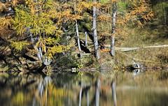 lakeside... (JohannesMayr) Tags: palpuognasee albulapass schweiz switzerland see lake spiegelung herbst autum wald wood bäume trees reflejos reflections