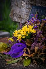 beautiful flowers upon a grave in zagreb (Sam Scholes) Tags: mirogojcemetery graves zagreb travel landmark graveyard vacation europe cemetery croatia cityofzagreb hr