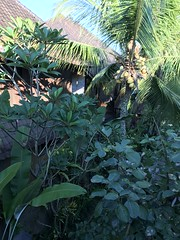 It was almost like living in the bush- my room was massive! (shankar s.) Tags: seasia indonesia java bali islandparadise baliisland touristdestination hotel lodgings accomodation resort entrance blissubudspaandbungalow ubudbali reception garland statue idol hindufaith hindureligion hinduism prayer shrine garden landscaping greenery tree
