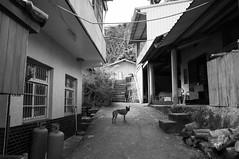 R1016890 (Mickey Huang) Tags: ricoh gxr gr lens a12 28mm f25 bw balck white monochrome 黑白 taiwan street snap