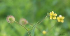 Chaleur / Warmth (Donald Plourde) Tags: fleurs flowers chaleur warmth