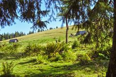Trip to Mount Kukul-August-2018-23 (pavlo.malyshchak) Tags: travel mountains carpathians ukraine family summer vacation forest