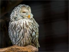 il prend la pose !!! (musette thierry) Tags: oiseau musette thierry plume pairidaiza belgique hainaut animalier animaux animal nikon d800