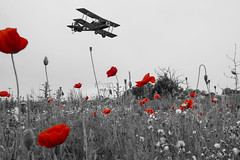 Lest We Forget (somedaysooned) Tags: worldwar firstworldwar 100 years remembrance remembrancesunday poppies battlefields battlefield centenary 100yearsofremembrance lestweforget thegreatwar raf100 100years war ww1 2018 11112018 19182018 trenches armistice