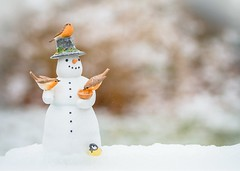 Snowman (Karen_Chappell) Tags: snow snowman xmas noel holiday christmas snowing snowy decor decoration figurine stilllife bokeh birds bird