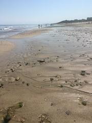 Sandbar (hannaschmitz) Tags: capecod ma massachusetts sandwichma beach shore water sand sky nature