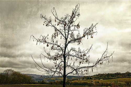 WINTER TREE   -   ARBOL DE INVIERNO