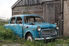 1959 Fiat 1100 (NielsdeWit) Tags: nielsdewit car vehicle ad6660 favourite abandoned fiat 1100 103d 1100103d millecento blauw blue mijdrecht wilnis vinkeveen rust forgotten