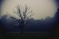 2018 Barnfull 6D (41)-Edit (Scott Sanford Photography) Tags: 6d canon ef50mmf14 eos fog morning naturalbeauty naturallight nature outdoor texas topazlabs mist trees