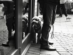 Dog in the Mirror (Bury Gardener) Tags: suffolk streetphotography street streetcandids snaps strangers candid candids people peoplewatching folks nikond7200 nikon england eastanglia uk burystedmunds bw blackandwhite britain monochrome mono 2019 cornhill