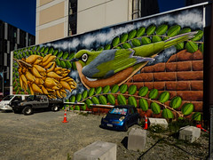 Rise From Rubble (2017) by Brandon Warrell (Steve Taylor (Photography)) Tags: kowhai silvereye theenlivenplacesprogramme bird graffiti mural streetart carpark trafficcone roadcone cone colourful brick block concrete newzealand nz southisland canterbury christchurch city plant leaves seed car automobile cloud
