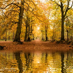 Woodland reflections (~ **Barbara ** ~) Tags: woodland trees autumn avenue fall red leaves beechtrees reflections water photoshop colourful canon7dii