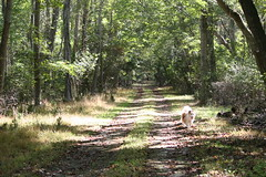 Deep Into the Woods (eyriel) Tags: road lane drive grass woods landscape dog pet canine