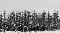 Winter Forest (Pascal Riemann) Tags: schnee deutschland landschaft kahlerasten sauerland sw wald natur winterberg germany landscape nature outdoor schwarzweis snow bw blackandwhite einfarbig forest monochrome
