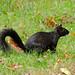 Squirrel 18