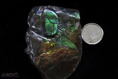 ammolite from ammonites (zawaski -- Thank you for your visits & comments) Tags: ammolite 925 silver handmade craft art jewellery zawaski©2018canadabeautynaturallightambientlightnoflashcanmorealbertarockymountainscalgarylovecanonef50mmf25macro ©2019 robert zawaski©29019 ©robertzawaski©2019 ©2019robertzawaski zawaski ©2019zawaski