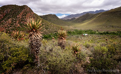Cottage in Paradise (Panorama Paul) Tags: paulbruinsphotography wwwpaulbruinscoza southafrica westerncape littlekaroo sollasollew route62 aloeferox nikond800 nikkorlenses nikfilters